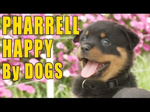 Pharrell - Happy (Puppy & Doggy Version)