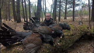 Охота на глухаря Южный Урал 2020