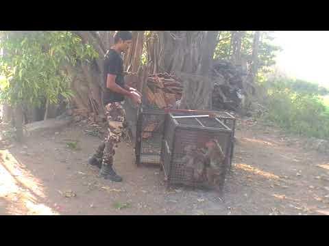 Monkey Catcher In Mumbai Maharashtra