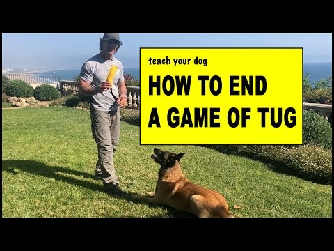 How to End a Tug Game with Your Dog - Dog Training Video