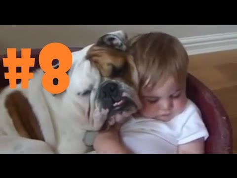 Kids and pets fails #8 Huge bulldog and little baby 2017