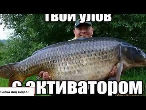 Много рыбы с активатором клева fishhungry.