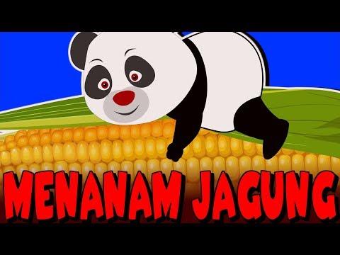 Menanam Jagung| Lagu Anak-Anak Indonesia Terpopuler | Kumpulan | Lagu Anak TV