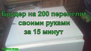 брудер на 200 перепелят своими руками за 15 минут