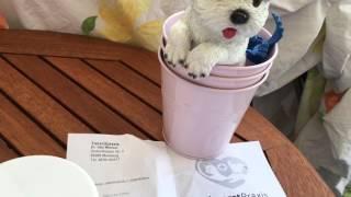 Кишечный грипп у собаки  Германия  ПМЖ Германия