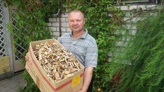 Рассказ о сушеных вешенках (Dried oyster mushrooms)