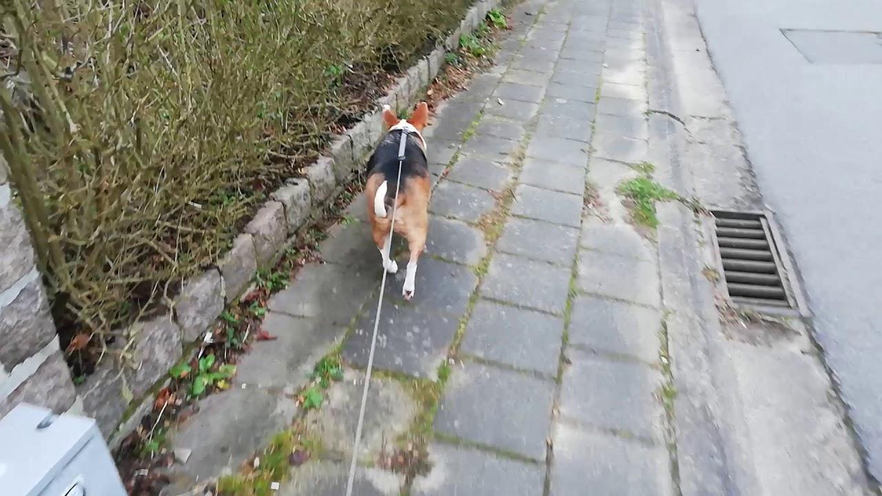 Flipke geniet van zijn wekelijkse wandelingen