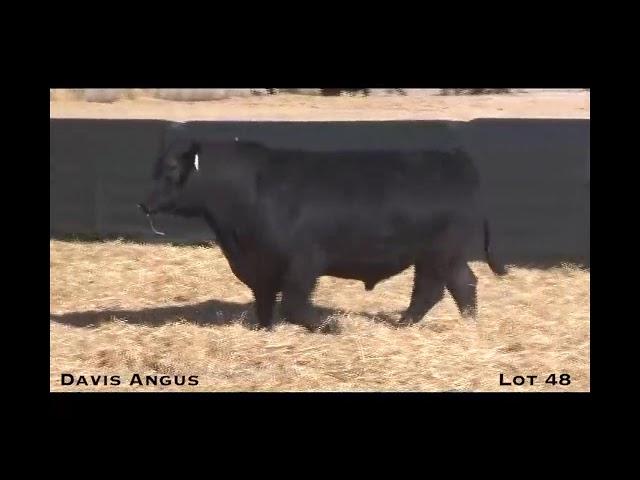 Davis Angus Lot 48