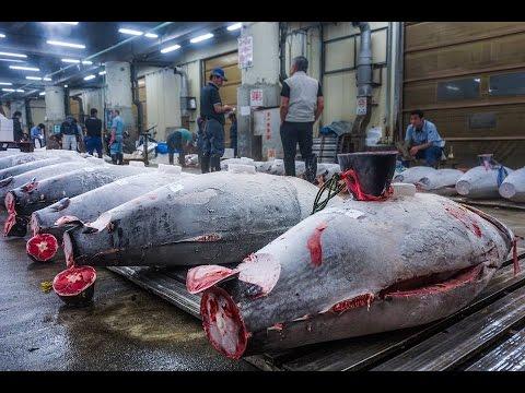 Tuna Auction Tsukiji Fish Market Tokyo, Japan