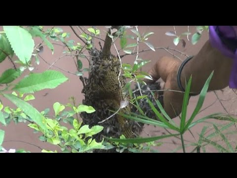 Easy Steps To Remove Beehive From House Without Any Safety Real