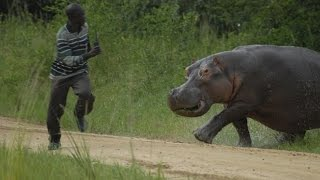 Crazy Animal Attack On Humans - Funny Animal Attacks On People