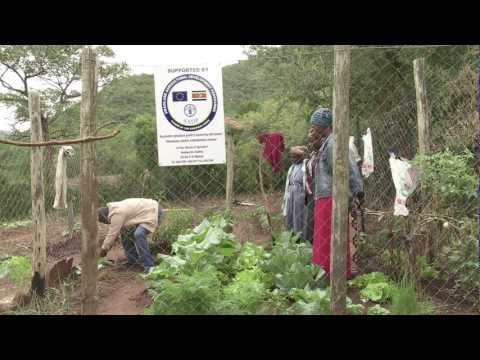Revitalizing agriculture in Swaziland