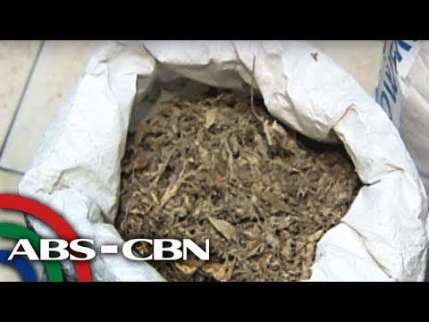 Magulang ng mga may epilepsy, umaasang gawing legal ang medical marijuana