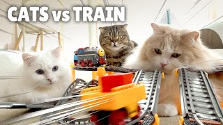 Cats vs TrainㅣKittisaurus