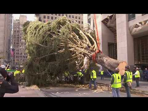 Maz - Rise Rockefeller Tree RISE!