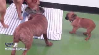 Auckland puppy school