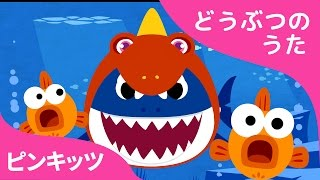 ティラノ帽子のサメのかぞく | 恐竜+サメ | どうぶつのうた | ピンキッツ童謡