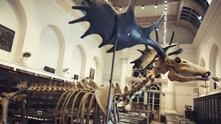 INDIAN MUSEUM KOLKATA TOUR INDIA's LARGEST & OLDEST museum of india..  Exploring full museum 2017