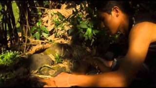Film Terbaru Tahun 2013 Dinding Hutan#00dcsc