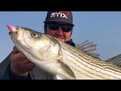 How To Locate Delta Striped Bass!