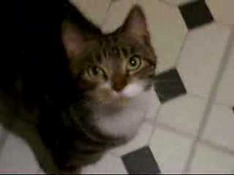 One smart cat!