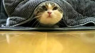 Приколы !!! Кот Мару