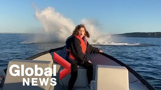Humpback whales breaching water surprise family off Newfoundland coast