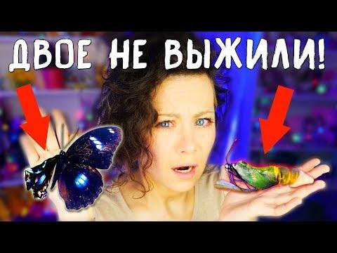 Вопрос: Может ли бабочка перелететь океан Почему?