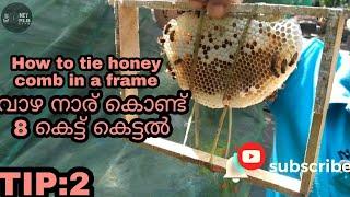 വാഴ നാര് ഉപയോഗിച്ച് അട റീപ്പറിൽ കെട്ടുന്ന രീതി/-How t๐ tie honey comb in a frame.Bee keeping class