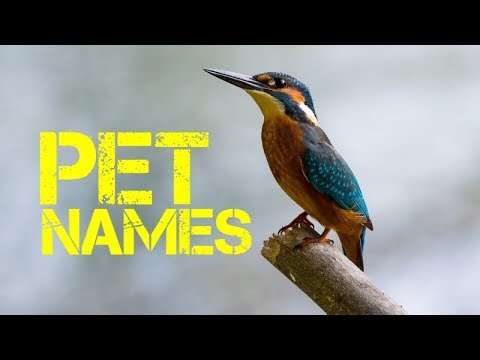 U Names For Birds Male