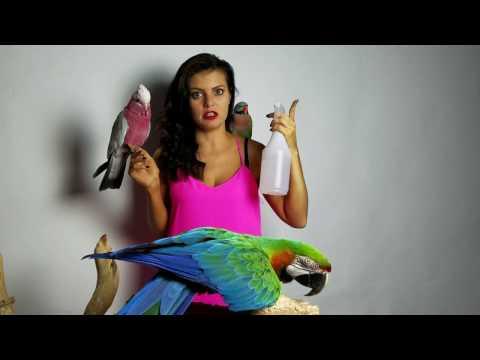 How Do I Give My Parrot A Bath? | PARRONT TIP TUESDAY