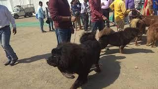 dog show in dehradun