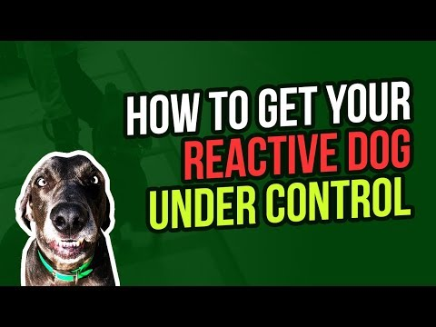 HOW TO GET YOUR REACTIVE DOG UNDER CONTROL