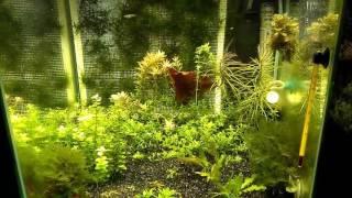 LED прожекторы на аквариуме(, 2017-03-15T10:11:06.000Z)