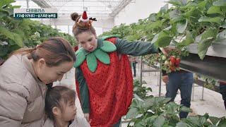 (농촌 교육 농장) '영어'와 '딸기 체험'을 접목시킨…