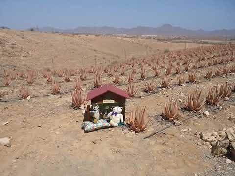 Aloe Vera Beauty Farm Fuerteventura
