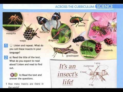 5 класс  Английский язык  Англ  в фокусе  Насекомые  Домашнее задание страница 73