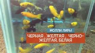 Поставки в магазине акваримных рыбок