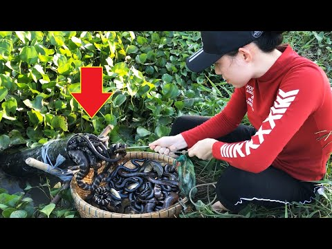 Amazing Fish Trap Catch Lot Of Water Snakes And Big Fish