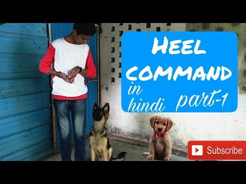 How to train a dog heel command in Hindi (part-1)|Dog training in Hindi |