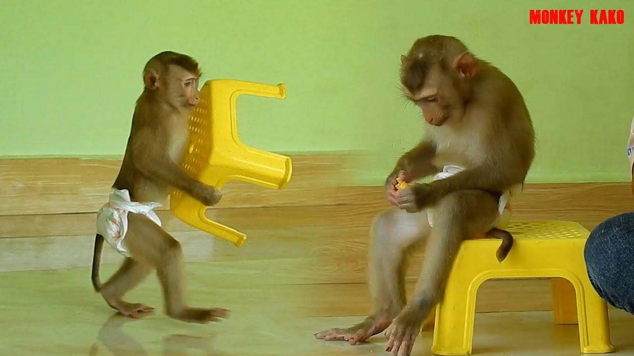 Adorable Monkey Kako Walking Carry Yellow Chair