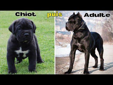 10 Races de Chiens du Chiot a l'Adulte