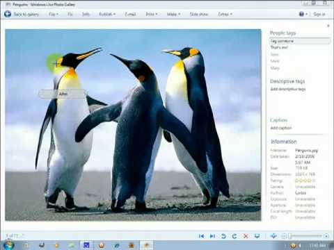 Install and use Windows Live Photo Gallery for Windows Free