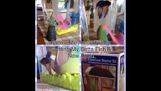 Walmart betta fish vlog! Thumbnail