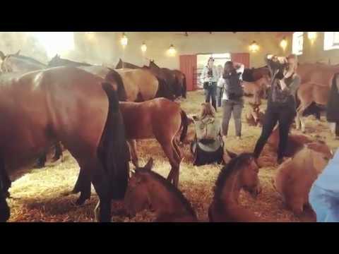 ekaterina-druz-equine-photo-@druz-horse-photo
