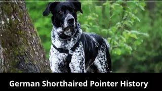 German Shorthaired Pointer Dog History