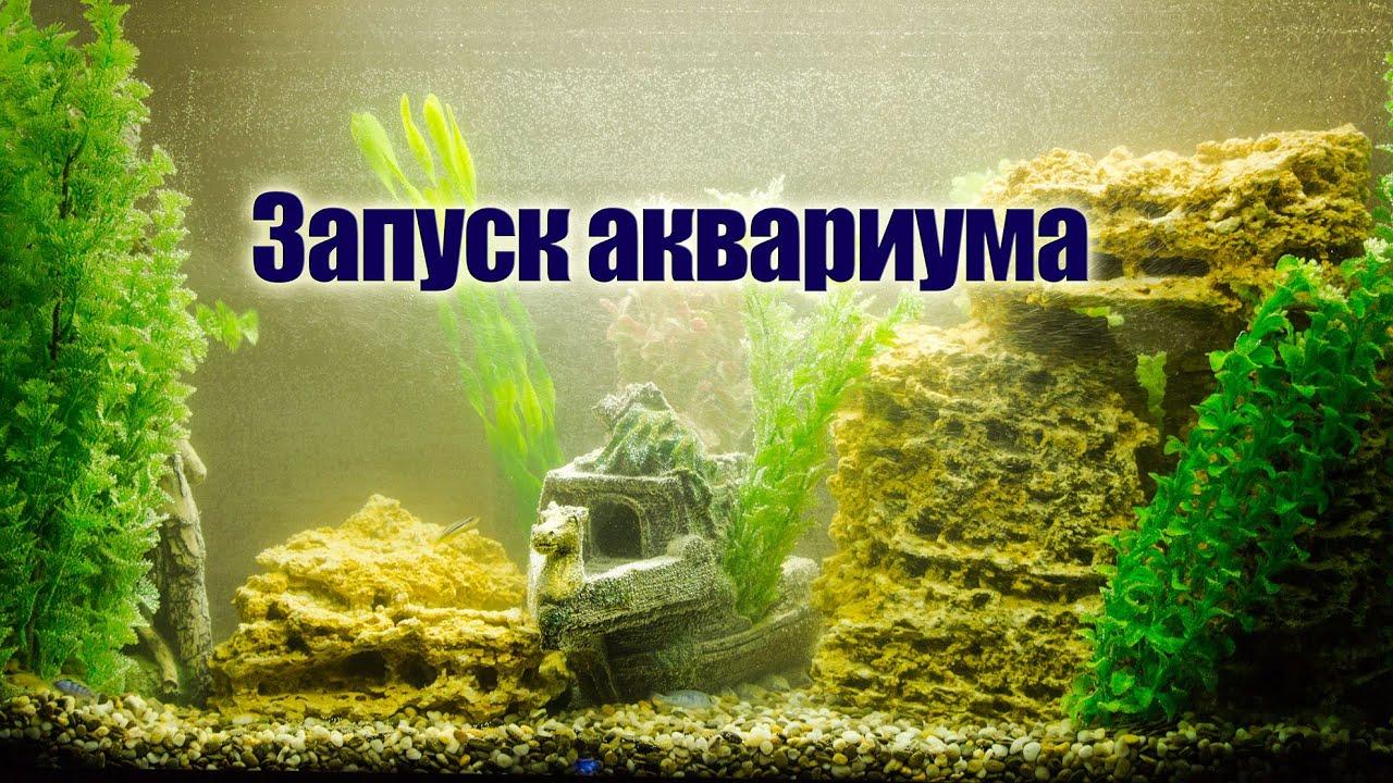 Запуск Аквариума: пример оформления и запуска аквариума. Аквариумистика.