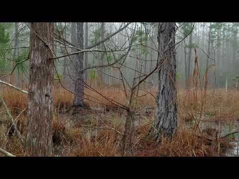 Richloam Baird Unit WMA Public Land Deer Hunting