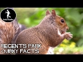 Fun London Guides - Where to feed squirrels - Regents Park