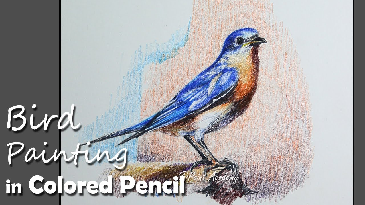 colored pencil painting eastern bluebird step by step